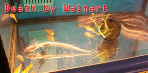 Death by walmart aka web design for 10 fish in a tank riddle